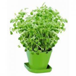 Souprava pro pěstování bylinek Tescoma SENSE, oregáno (899070.00)